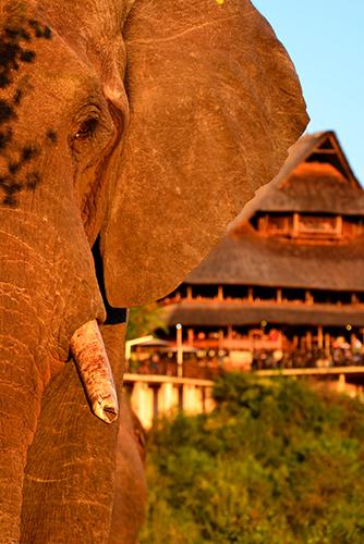 Victoria Falls Safari Lodge - Zimbabwe - Elephant