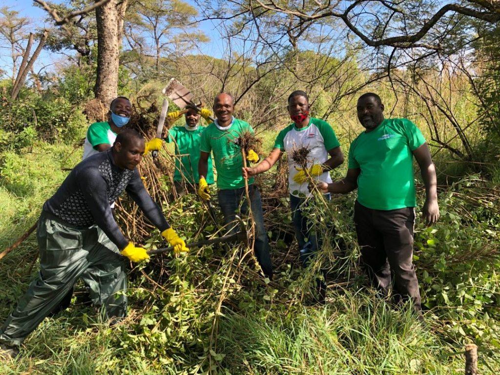 The Victoria Falls Safari Lodge estate team removing lantana from the Victoria Falls rainforest